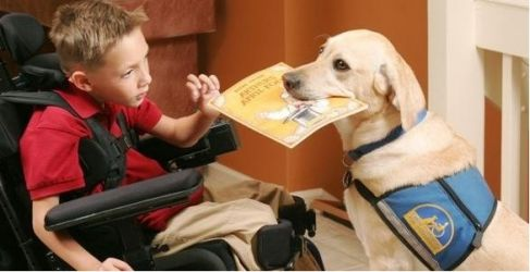 Chien d'assistance « handi'chien » (Crédit Canine Companions for Independence)